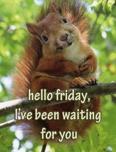 Hello Friday quotes quote friday happy friday tgif days of the week friday quotes friday love happy friday quotes