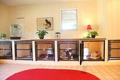 cat kennels for boarding | Cat Boarding. Love this. Just make them higher up so it's more ergonomic