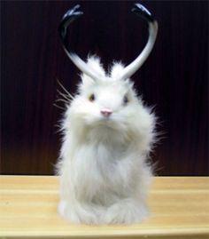 StealStreet SSFR1800W Jackalope Bunny Rabbit Lifelike Decoration Model Collectible Figurine >>> For more information, visit image link.