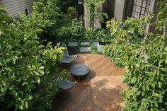 Maitland St - Ben Scott Garden Design