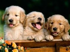 cute baby puppies - Google Search