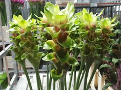 #Curcuma #JungleFever; Available at www.barendsen.nl