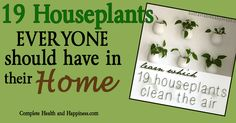 Why invest in expensive electrical air purifiers when you could purchase a few types of houseplants to clean and filter the air naturally and inexpensively? Much of the research on these beneficial houseplants has been done by NASA scientists researching ways to create suitable space station habitats. All indoors plants (flowering or not) are able …