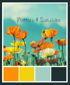 Poppies & Sunshine - Love this Color Scheme for a spring or summer wedding!