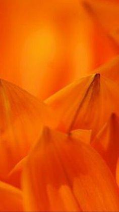 Orange Is The New Black, Orange Yellow, Burnt Orange, Orange Color, Orange Zest, Orange Aesthetic, Aesthetic Colors, Orange You Glad, Pantone