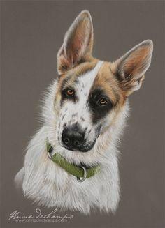 Stella - Croisée berger Pastel Art, Husky, Corgi, Paintings, Animals, Dogs, Corgis, Animales, Paint