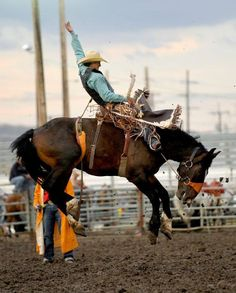 Pro Rodeo News Updates