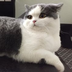Pizza for dinner?? #supertofucat #kitten... Follow us on Instagram :D #cats #cat #catlover #lovecats #funny #fun #cute #socute #feline #felines #felinefriend #fur #furry #paw #paws #kitten #kitty #kittens #kittycat #kittylove #fluffy #fluff