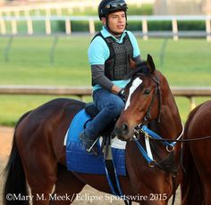 2014 Kentucky Oaks winner and champion Untapable on @ChurchillDowns track this morning @ABRLive