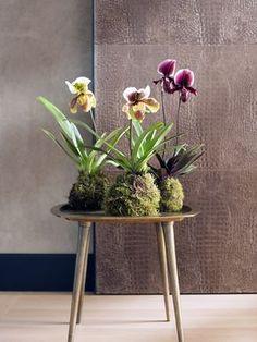DIY: Orchideen-Kokedama – Pflanzenfreude.de