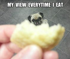 Pugs have a variety of facial expressions. For that reason, pug memes are funny and I hope these 101 dog memes featuring pugs bring a smile to your day! Funny Animal Memes, Dog Memes, Cute Funny Animals, Pug Pictures, Funny Animal Pictures, Pug Pics, Funny P, Funny Dogs, Hilarious