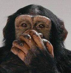 If Apes Can't Talk, How Can They Dominate A Planet?  ... see more at PetsLady.com ... The FUN site for Animal Lovers | via @roncallari