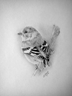 American goldfinch by on DeviantArt Bird Pencil Drawing, Color Pencil Sketch, Pencil Drawings Of Animals, Bird Sketch, Animal Sketches, Bird Drawings, Charcoal Art, Tattoo Graphic, Zentangle Drawings