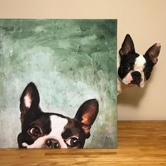 All About Playfull Boston Terrier Puppy Exercise Needs Boston Terrier Art, Dog Portraits, Animal Paintings, Dog Art, Pet Birds, Painting & Drawing, Cute Dogs, Street Art, Cute Animals