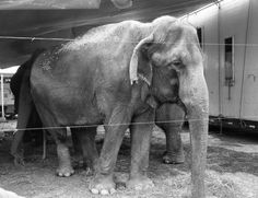 5 Circuses That Need to Follow Ringling and Get Rid of Elephant Acts Now | PETA's Blog | PETA