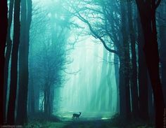 Deer in a Blue Forest photography blue nature forest peaceful foggy deer