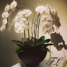 cool vancouver florist If you would like to get one of these beautiful Orchids please visit http://ift.tt/1P28gbG. Price:$350. Order online or call 604-319-0787. #orchiddesign #orchid #flowerluxury #onlineflorist #decoration #instaflower #freshflowers #flowerarrangement by @flower_luxury  #vancouverflorist #vancouverflorist #vancouverwedding #vancouverweddingdosanddonts
