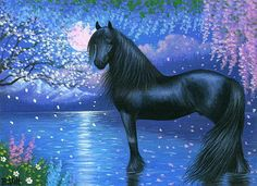 Black friesian horse Star Filled Sky, Briget Voth