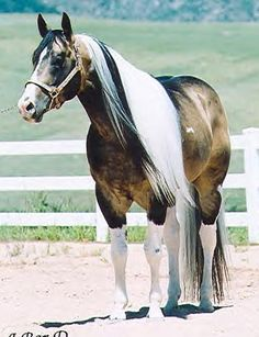 EWAS Kitty Kat's Treasure The Combination....gorgeous mare!!