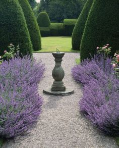 Stunning borders of Nepeta 'Six Hills Giant' with sundial & topiary Yews beyond, at Chirk Castle, Wrexham #Formalgardens