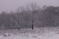 Snow covered landscape after a snowstorm. Location: Bucks County, Pa