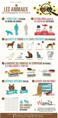 infographie #animaux #france #chiffres
