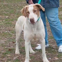 Silly Has 10 Days Left To Live! Euthanasia date: 2014-05-30   Reason for euthanasia: Space Silly Great Dane & Spaniel Mix • Adult • Male • Extra Large Wetzel County Animal Shelter New Martinsville, WV http://www.dogsindanger.com/dog.jsp?did=1397219388960