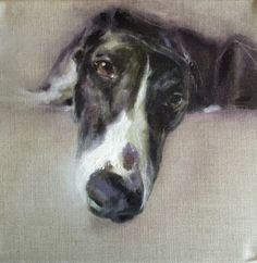 Wildlife and pet portraits in oils on canvas. by JulieBrunnArt Dog Sounds, Greyhound Art, Grey Hound Dog, Dog Portraits, Portrait Paintings, Beautiful Dogs, Animal Paintings, Dog Art, Painting & Drawing