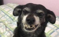 Neguinha perdeu um de seus dentes e exibe a 'janelinha' com felicidade