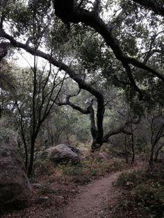 San Antonio Creek Trail. Tucker's Grove County Park, Santa Barbara. 3.4 mi