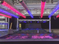 Research shows LED Grow lights have healthy impact on vegetables & herbs - UT research shows LED lights have healthy impact on vegetables, herbs. LED lights come in all colors, blue and red are the most important to plant growth. The LED lights also emit less heat.