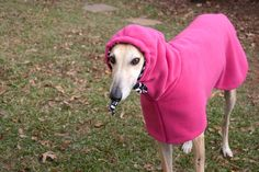 I don't care what anyone says... Greyhounds are one of the cutest breeds. :)