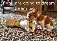 Hund Slim Slimline Wandkalender 2020 West Highland Weiß Terrier Westie