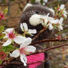 【techi__techi】さんのInstagramをピンしています。 《9月の桜はなんて儚げ #桜#cherryblossom #編みぐるみ #amigurumi #handmade #cat #北海道#猫#リエ猫 #rieneko #hokkaido》