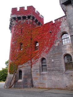 Penrhyn Castle / Wales
