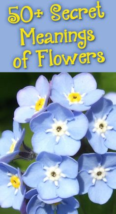 This is cool- find out the secret meaning of different types of flowers- #flowers