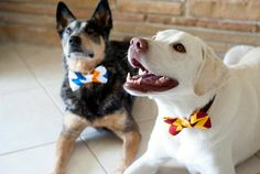 """A <a href=""""https://www.etsy.com/listing/201280871/dog-bow-tie-the-go-noles"""" target=""""_blank"""">bow tie</a> for the dog that has many formal events to attend."""