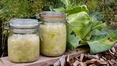 Foto: Eva Robild / SVT Tareq Taylor, Pickles, Cucumber, Mason Jars, Recipes, Tv, Dog, Television Set
