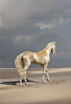 So beautiful...like pearl white satin. All The Pretty Horses, Most Beautiful Horses, Animals Beautiful, Simply Beautiful, Majestic Horse, Majestic Animals, Golden Horse, Akhal Teke Horses, Animals And Pets