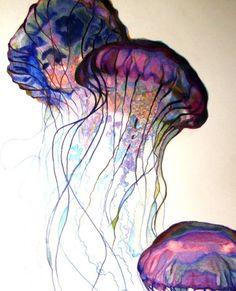 meduse                                                                                                                                                                                 More