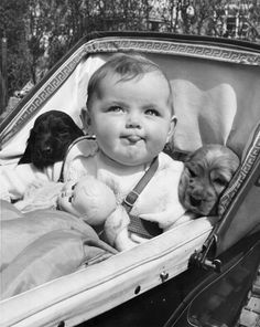 Chronically Vintage: Celebrating with 25 darling black and white vintage dog photos! Funny Vintage Photos, Vintage Children Photos, Vintage Photographs, Vintage Humor, Vintage Dog, Baby Animals, Cute Animals, Cocker Spaniel Puppies, Baby Puppies
