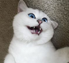 Coby the Cat's healthy teefies Animals And Pets, Baby Animals, Funny Animals, Cute Animals, Funny Cats, Pretty Cats, Beautiful Cats, Cute Kittens, Cats And Kittens