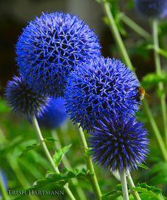 Flowers in Brussels Part Sun Flowers, Love Flowers, Wild Flowers, Beautiful Flowers, Astilbe, Agapanthus, Carnivorous Plants, Summer Beauty, Shade Plants