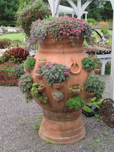 herbs for garden. pot on top of pot