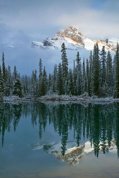 Beauty Rendezvous - Cathedral Mountain Reflected in Lake O'Hara byLee...
