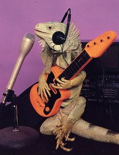 iguana rock and roll all night and party every day!  [previous pinner's caption]