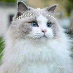 What a pretty cat