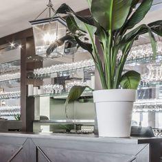 Fourchette Antillaise project reveal - Valérie De L'Étoile interior design Restaurant, Plants, Design, Restaurants, Plant, Design Comics, Supper Club, Dining Room, Planting