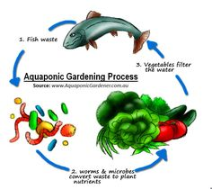 aquaponics-cycle-drawing-with-source.jpg