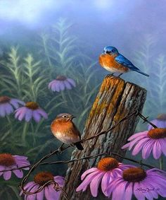 Bluebirds and Purple Coneflower – Larry Zach Wildlife Art Pretty Birds, Beautiful Birds, Graffiti Kunst, Bluebirds, Bird Illustration, Bird Pictures, Little Birds, Colorful Birds, Wildlife Art